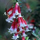 Red Bells by sienebrowne