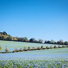 Flax Fields by JEZ22