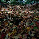 Colourful Leaves on the ground by Mjay