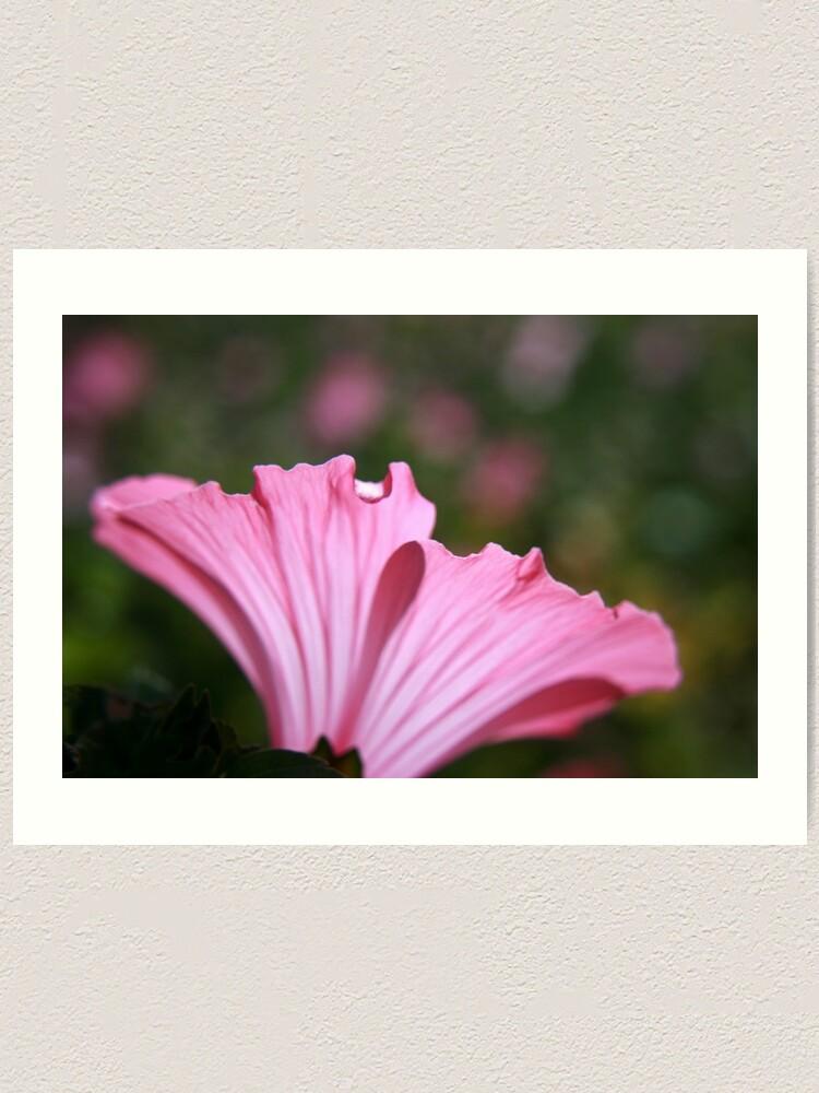 Alternate view of Delicate Pink. Art Print