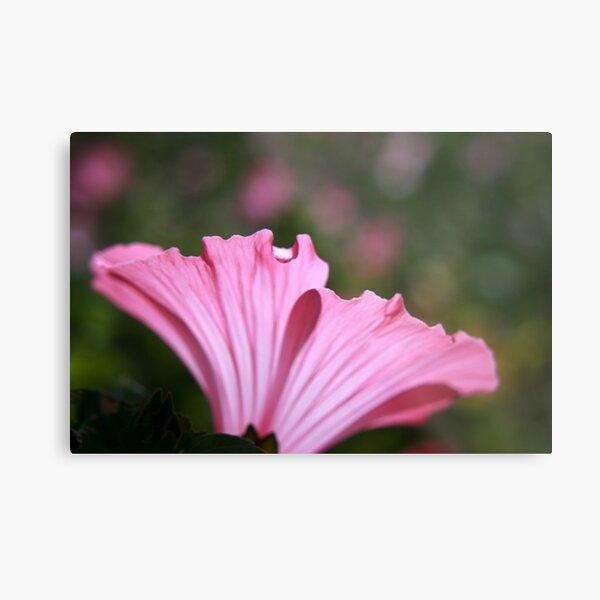 Delicate Pink. Metal Print