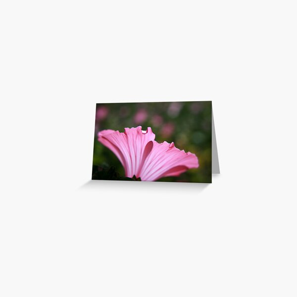 Delicate Pink. Greeting Card