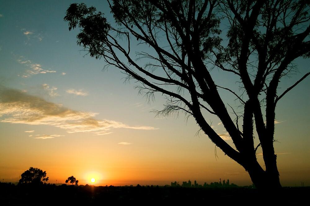 sunrise eucalypt by david de roach