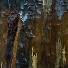 Wooden Stump by Mjay