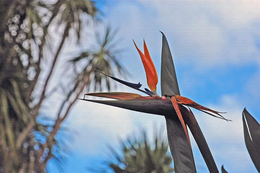 Bird of paradise not going to alight. by Bernard (Ben)  Bosmans