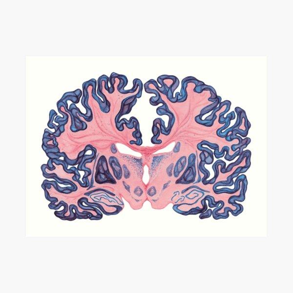 Gyri y remolinos del cerebro humano Lámina artística