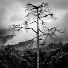 Einsamer Baum von David Bowman