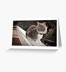 Peeved Puss! Greeting Card