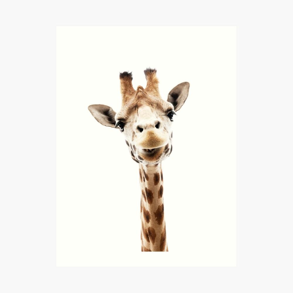Giraffe Kunstdruck