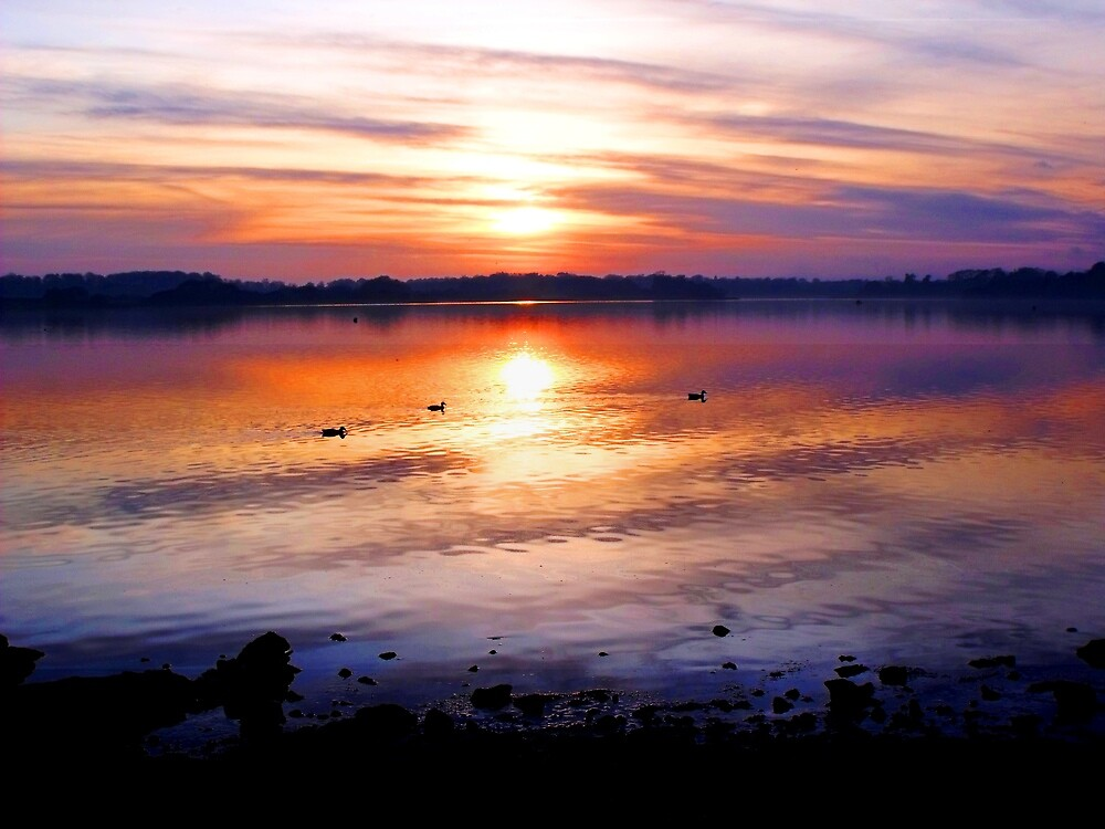 Duck Sunset by charlylou