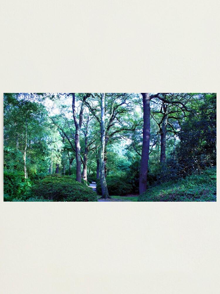 Alternate view of Isabella Plantation Photographic Print