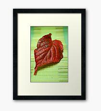 Blaze of colour Framed Print