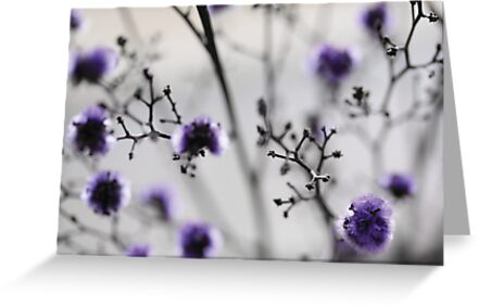 Purple & Grey by Anne Staub