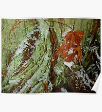 Snow In The Rainforest Poster