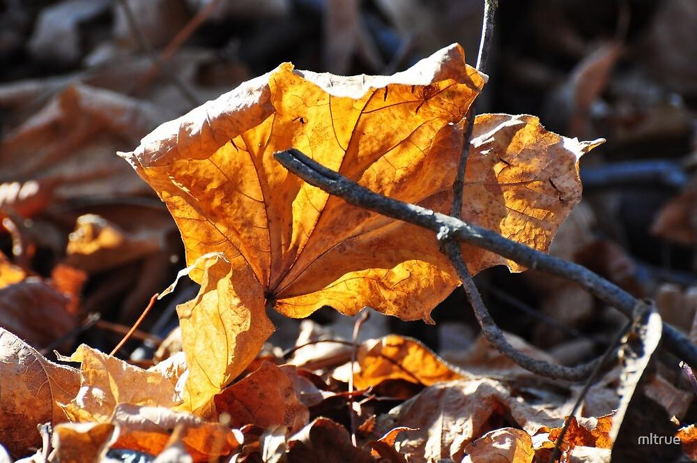 Sunlight on autumn leaf by mltrue