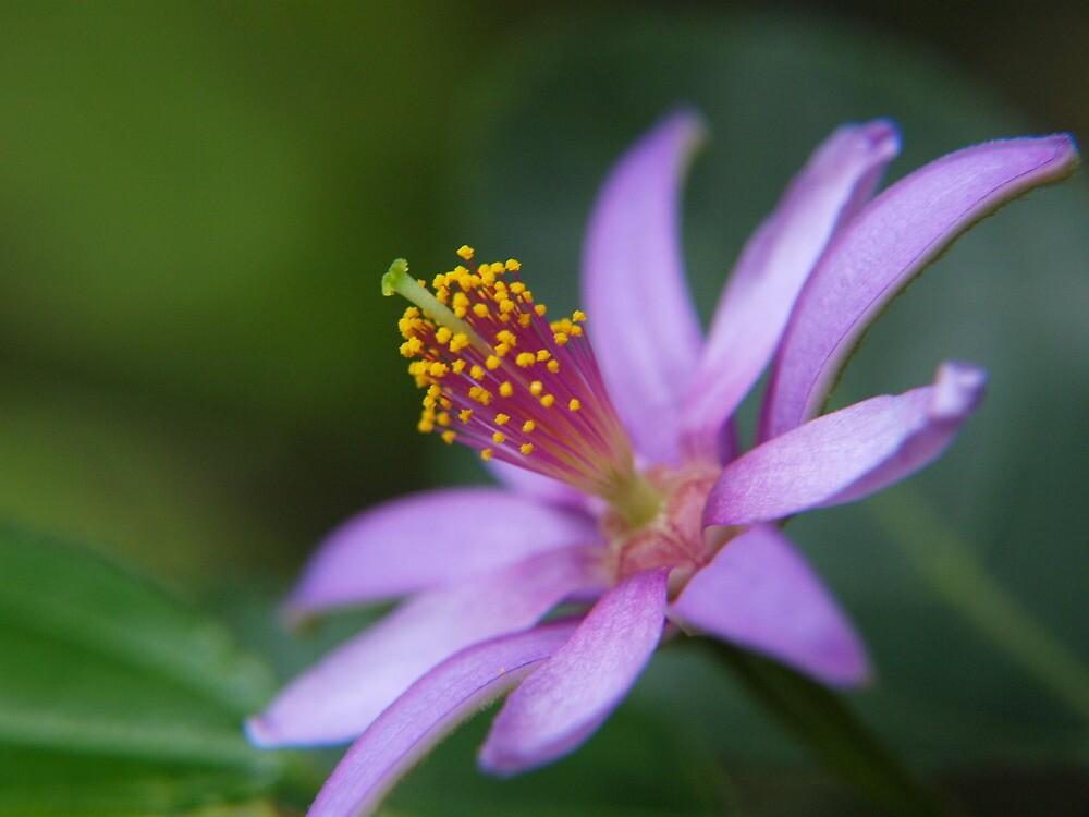 Pretty Purple- Wonderful Wollongong  by coadred