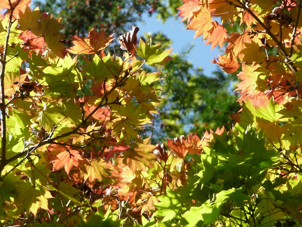 Autumn at Westonbirt by trunkguy