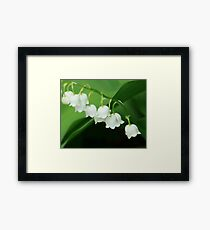 Lily of the valley for grandma Framed Print