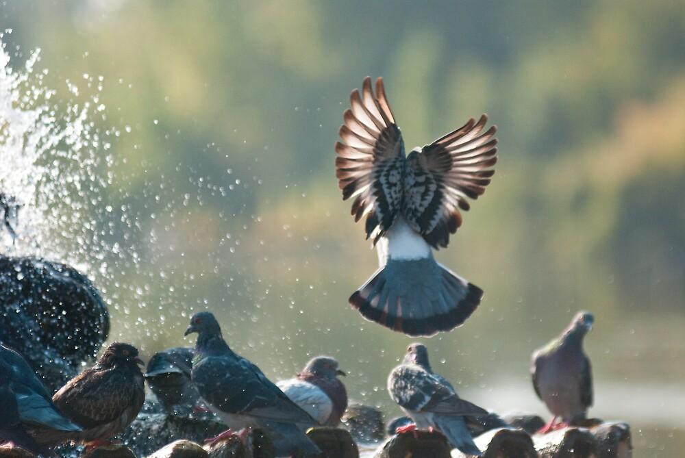 Pigeon Angel by feyip