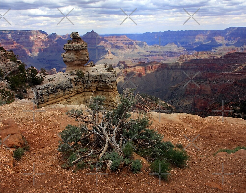 A Grand View by CarolM