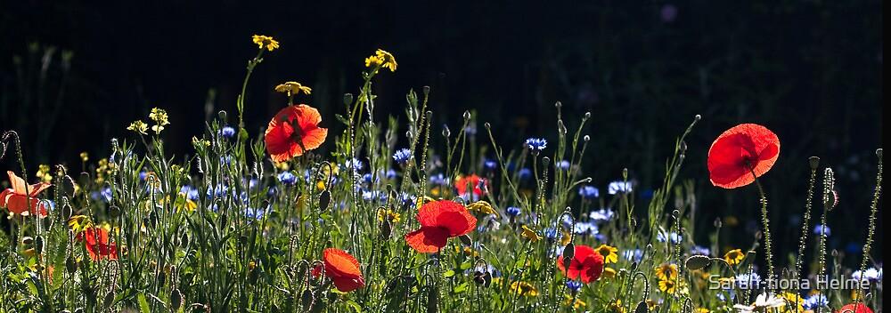 Wildflower Garden by Sarah-fiona Helme