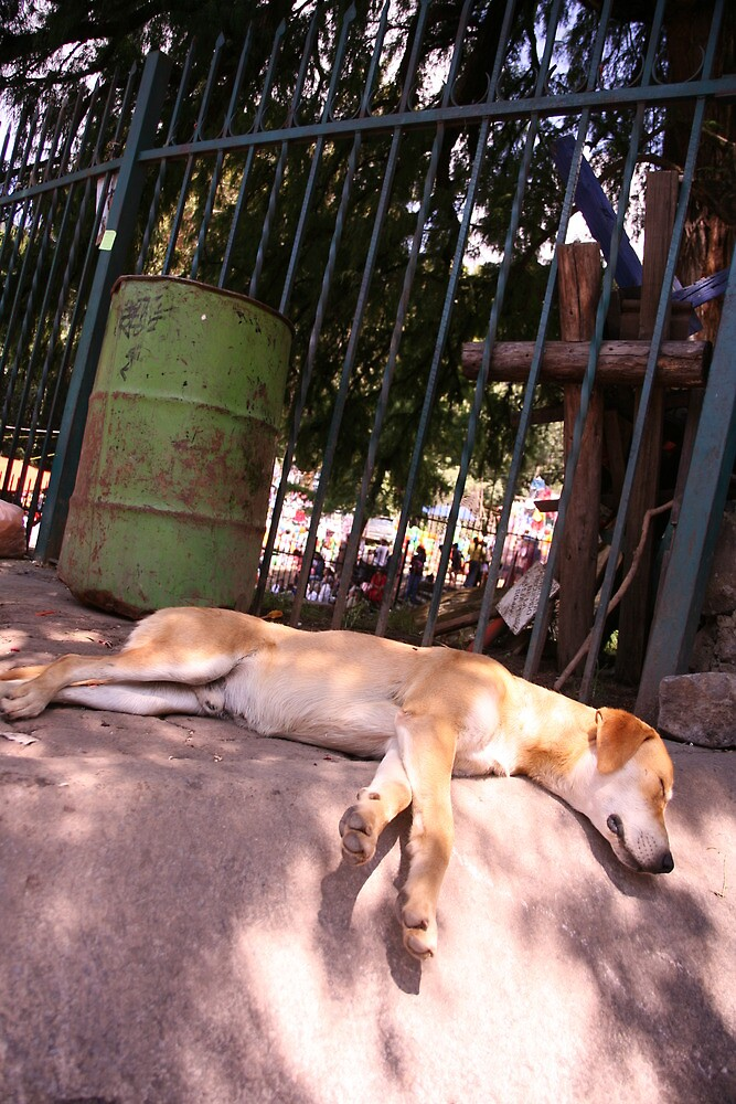 Dog Days, Chiampas by katw0man