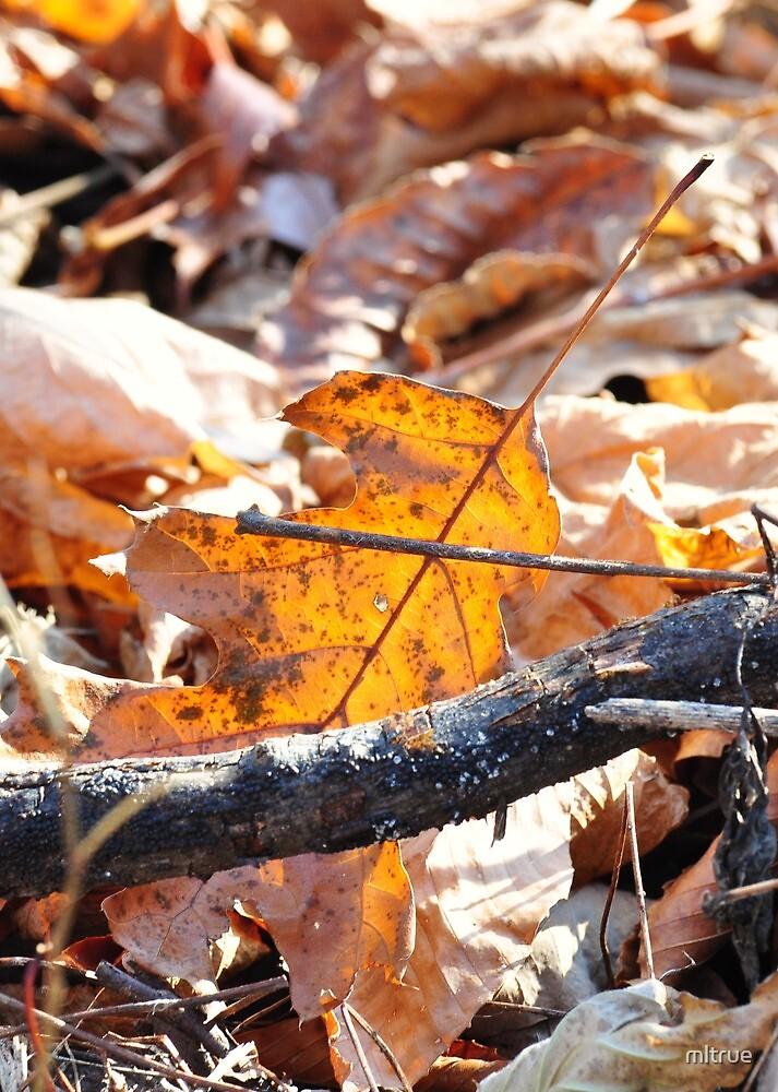 Oak leaf by mltrue
