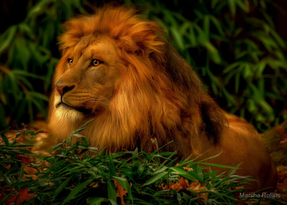 The Jungle King by Marsha Rollins