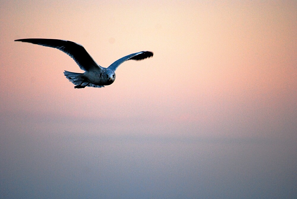 Lake Gull by Taylor Russell