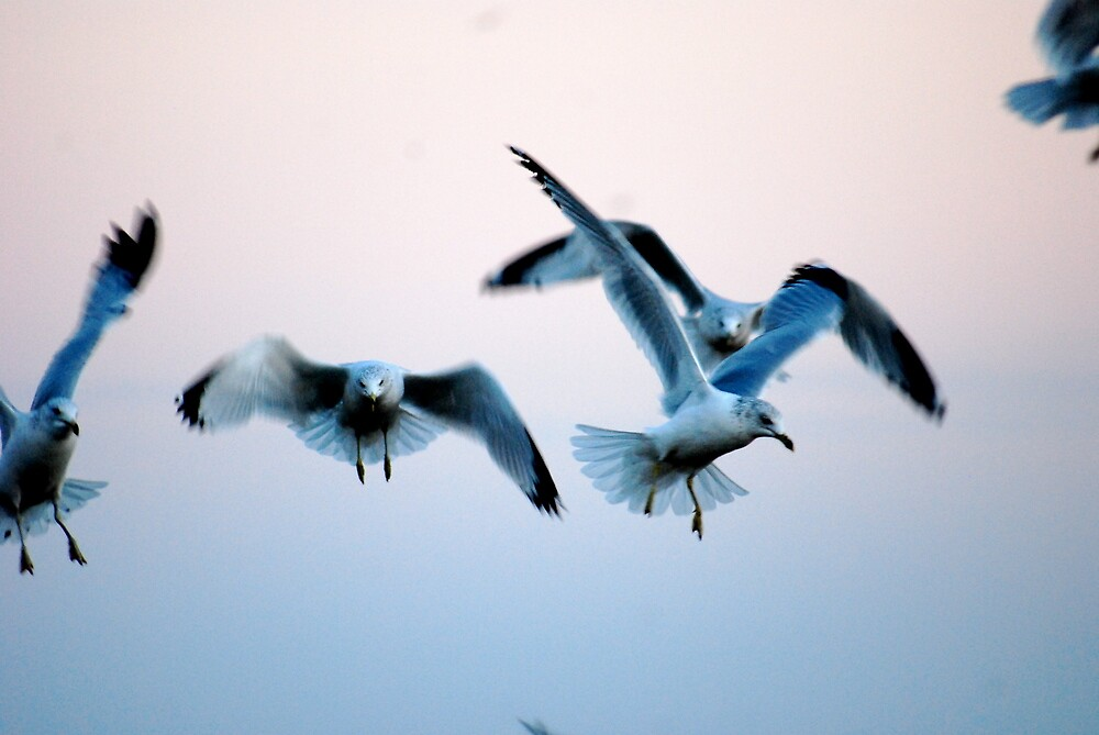Lake Gulls by Taylor Russell