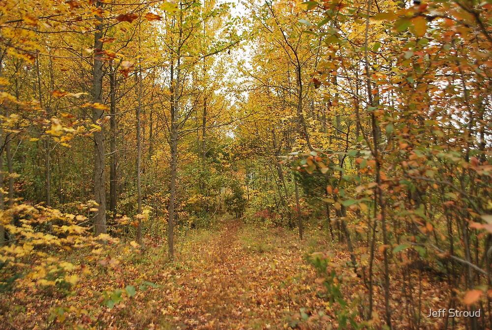 Last golden view (Path) by Jeff stroud