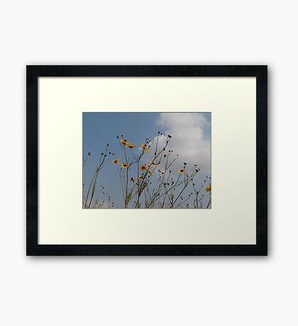 Wild Coreopsis Framed Print