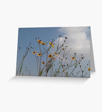Wild Coreopsis Greeting Card