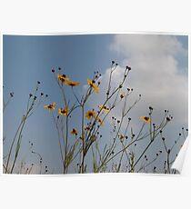 Wild Coreopsis Poster