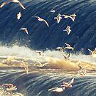 Birds  by PicsByMi