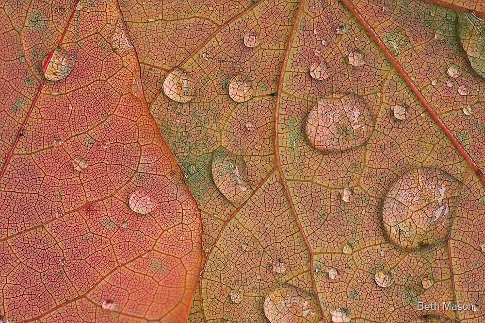 Redbud Leaves by Beth Mason