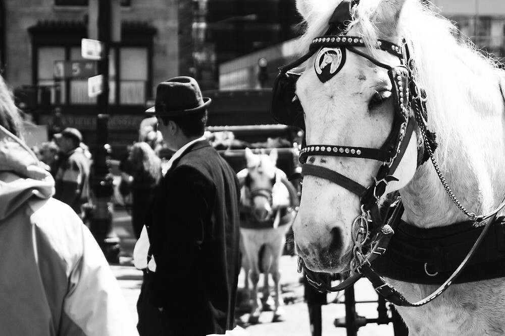 New York Horse by Samantha Perry