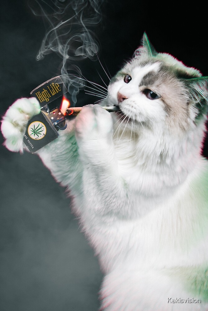 Cat Smoking Pot by Kakisvision