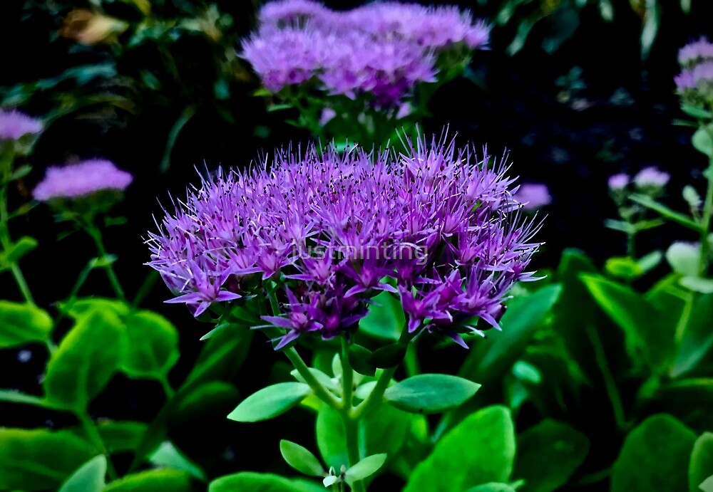 Purple Garden Fuzz by justminting