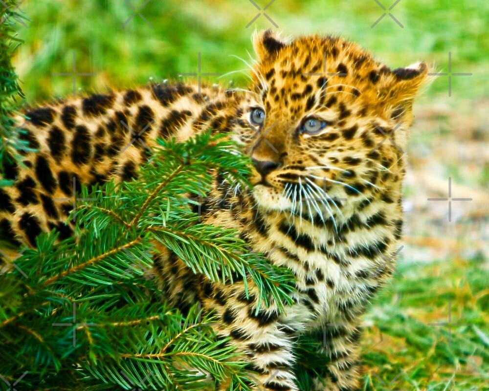 Amur Leopard Cub by Beverlytazangel