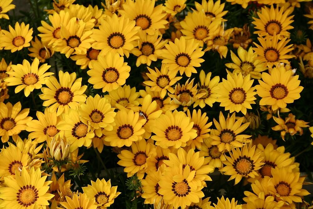 Yellow Splendour by djnoel