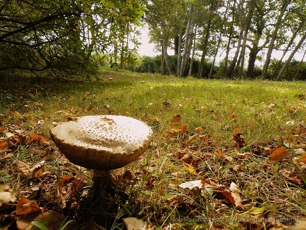 Fungi on the Forest Floor by Rob Parsons (AKA Just a Walker with a Camera)