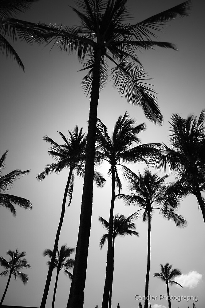 Picturesque Palm Paradise by Candler Photography