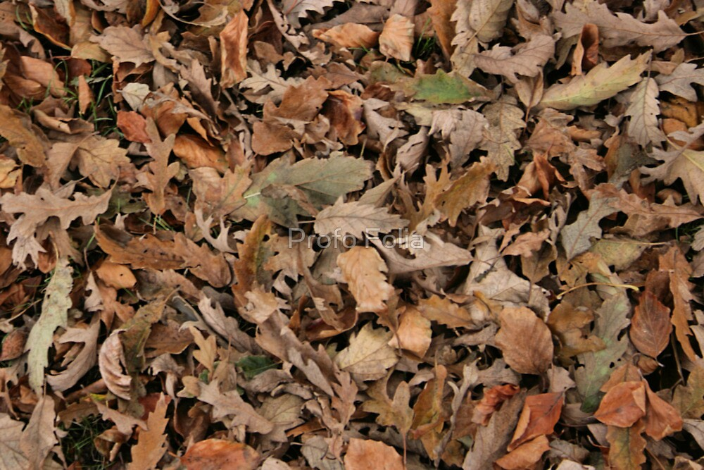 Autumn leaves by Profo Folia