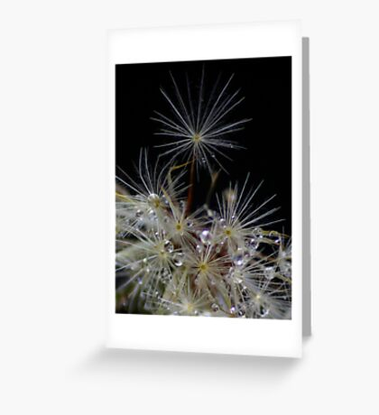 Reaching for the Stars. Greeting Card
