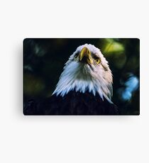 Bald Eagle - USA - Gift idea Canvas Print