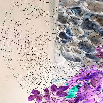 Spiders Web (Fliss Cook) by TinaJostDesigns
