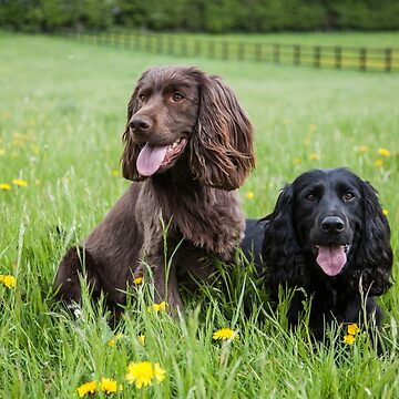 Spaniels in long grass by AlfSharp