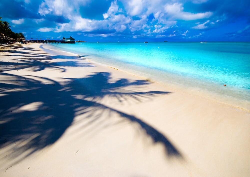 palms cast their shadows by Charlie Trotman