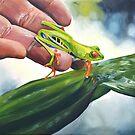 « Grenouille aux yeux rouges du Costa Rica » par cindybarillet